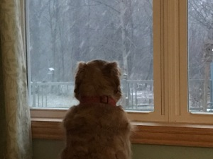 willow-at-window-snow