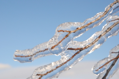 freezing_rain_on_tree_branch